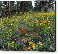 Mountain Wildflowers Acrylic Print by Leland D Howard