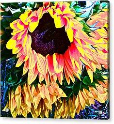 Mourning Acrylic Print by Gwyn Newcombe