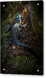 Mr Alley Gator Acrylic Print by Marvin Spates