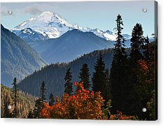 Aster Acrylic Print featuring the photograph Mt Baker From The Yellow Aster Trail by Alvin Kroon