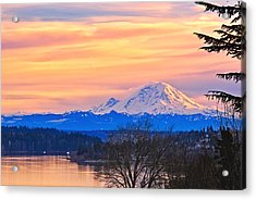 Mt Rainier From Lake Washington Acrylic Print by Alvin Kroon