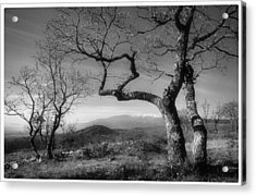 Mt Ventoux Acrylic Print by Robert Brown