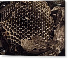 Mudwasp Nest 6 Acrylic Print by Anna Villarreal Garbis