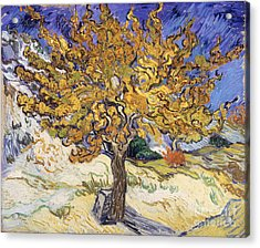 Mulberry Tree Acrylic Print by Vincent Van Gogh