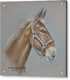 Mule Head Acrylic Print by Dorothy Coatsworth