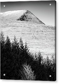 Mull Trees And Peak Acrylic Print by Dave Bowman