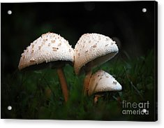 Mushrooms In The Morning Acrylic Print by Robert Meanor