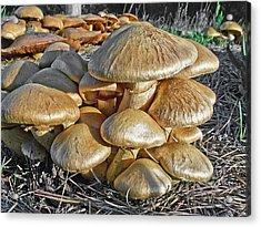 Mushrooms Acrylic Print by Lynn Andrews