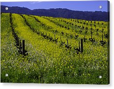 Mustard Grass Landscape Acrylic Print by Garry Gay
