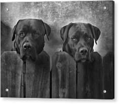 Mutt And Jeff Acrylic Print by Larry Marshall