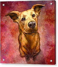 My Buddy Acrylic Print by Sean ODaniels