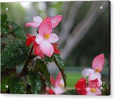 My English Garden 8 Acrylic Print by Hazel Holland