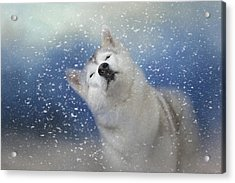 My Favorite Thing About Winter Acrylic Print by Jai Johnson