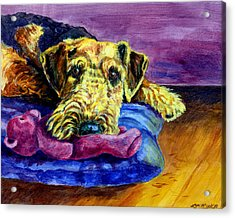 My Teddy Airedale Terrier Acrylic Print by Lyn Cook