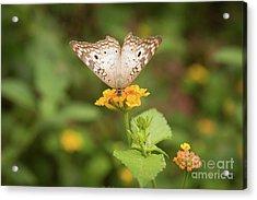 Namaste Butterfly Acrylic Print by Ana V Ramirez