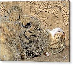 Nap Time Again Acrylic Print by Susan Leggett