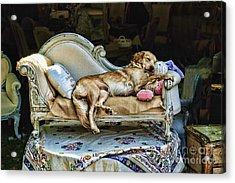 Nap Time Acrylic Print by Edward Sobuta