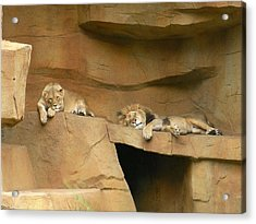 Nap Time Acrylic Print by Leeann Stumpf
