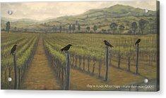 Napa Ravens Acrylic Print by Marte Thompson