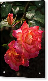 Natural Beauties Acrylic Print by Don  Wright
