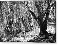 Natural Screen Acrylic Print by Gerlinde Keating - Galleria GK Keating Associates Inc