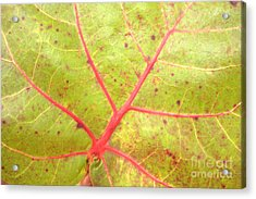 Nature Abstract Sea Grape Leaf Acrylic Print by Carol Groenen