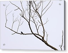 Nature - Bird On Branch 1 Acrylic Print by Arthur Babiarz