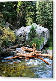 Nature's Filters Acrylic Print by Kristin Elmquist