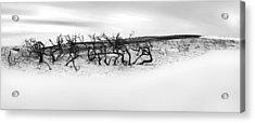 Nature's Remnants Acrylic Print by Az Jackson