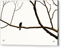 Nature - Bird On A Tree Branch 2 Acrylic Print by Arthur Babiarz