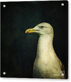 Naujaq Acrylic Print by Priska Wettstein
