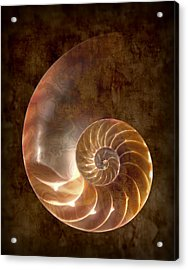 Nautilus Acrylic Print by Tom Mc Nemar