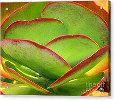 Neon Cactus Acrylic Print by Kathie McCurdy