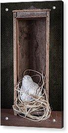 Nesting Bird Still Life Acrylic Print by Tom Mc Nemar