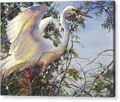 Nesting Egret Acrylic Print by Sue Zimmermann