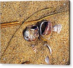 Nestled In The Sand Acrylic Print by Lynda Lehmann