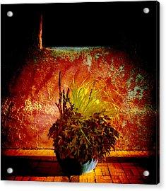 New Mexico Night Acrylic Print by Ann Powell