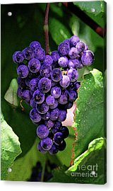 New Wine Acrylic Print by Constance Woods