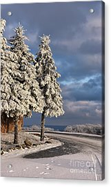 New Year's Day Acrylic Print by Lois Bryan