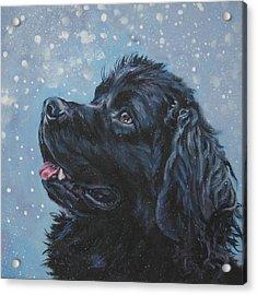 Newfoundland In Snow Acrylic Print by Lee Ann Shepard