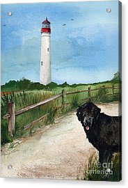 Newfy At Cape May Light  Acrylic Print by Nancy Patterson