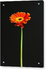 Next American Top Model Acrylic Print by Juergen Roth