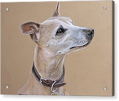 Niamh The Whippet Acrylic Print by Mary Mayes