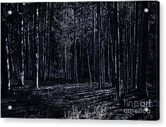 Night Thicket  Acrylic Print by Jorgo Photography - Wall Art Gallery