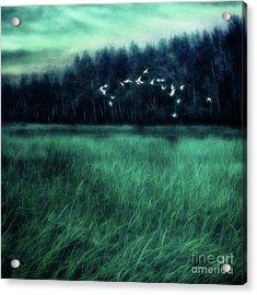 Nightbirds Acrylic Print by Priska Wettstein