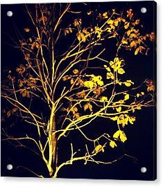 Nocturnal Tree Acrylic Print by Contemporary Art