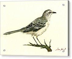 Northern Mockingbird Acrylic Print by Juan  Bosco
