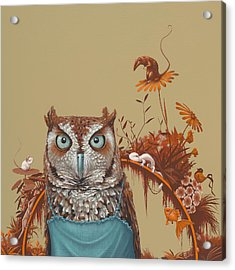 Northern Screech Owl Acrylic Print by Jasper Oostland