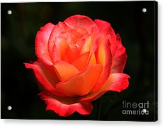 Not A Second Hand Rose Acrylic Print by James Eddy