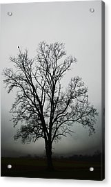 November Tree In Fog Acrylic Print by Patricia Motley